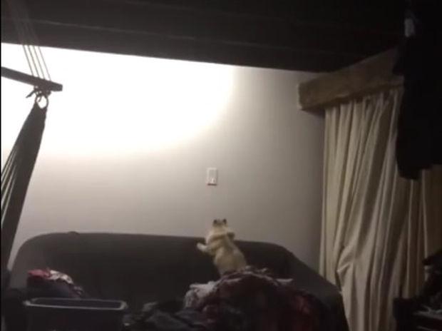 Ξεκαρδιστικό! Πώς να κάνεις τη γάτα σου να κλείσει το φως του δωματίου! (video)
