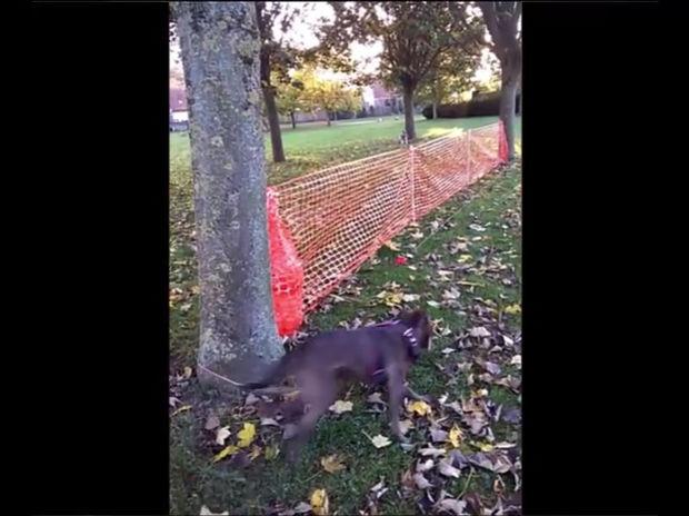 Ο ιδιοκτήτης του σκύλου βαριόταν πολύ να τον βγάλει βόλτα! Δείτε τι έκανε! (video)