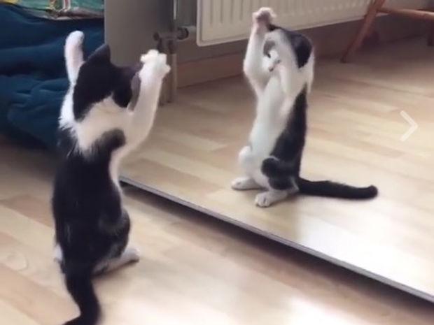 Το γατάκι βλέπει τον εαυτό του στον καθρέφτη για πρώτη φορά! (video)