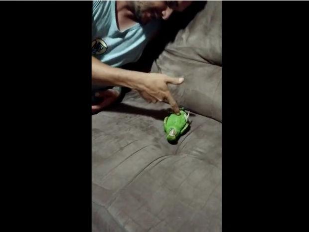 Ξεκαρδιστικό! Ο παπαγάλος παριστάνει το νεκρό! (video)