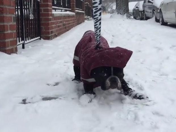 Ο σκυλάκος σιχαίνεται το χιόνι! (video)