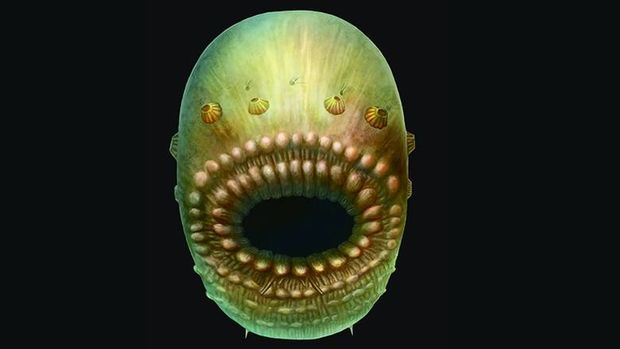 Το στόμα του αρχαιότερου προγόνου του ανθρώπου ήταν… διπλής χρήσης