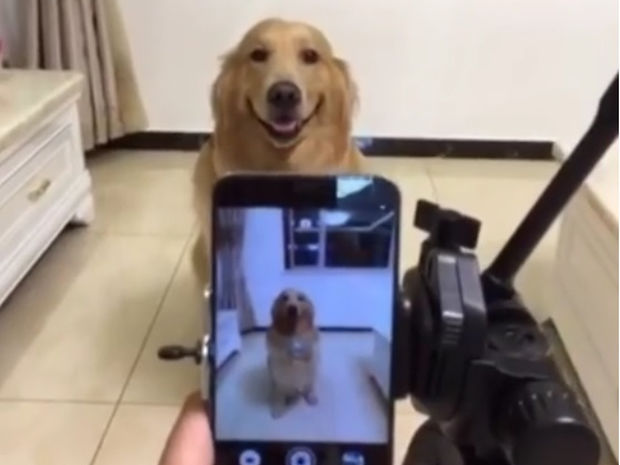 Δείτε τον σκυλάκο που χαμογελάει όταν στήνεται στο φακό! (video)