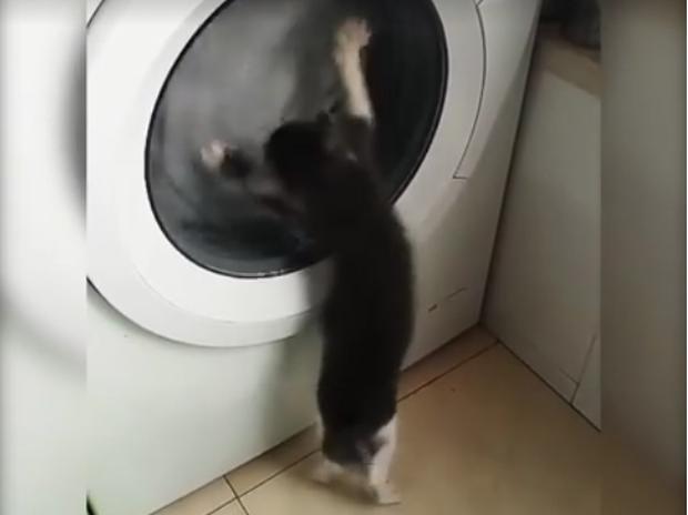 Το γατάκι επιτίθεται στο πλυντήριο ρούχων! Ό,τι πιο γλυκό θα δείτε σήμερα!
