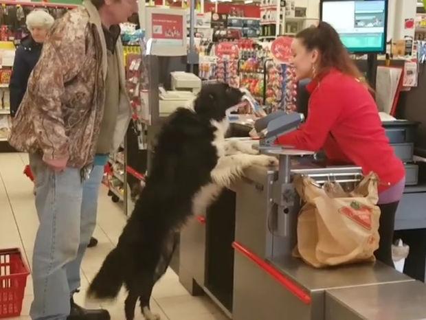 Απίστευτο! Ο σκυλάκος κάνει μόνος του τα ψώνια στο σουπερμάρκετ! (video)