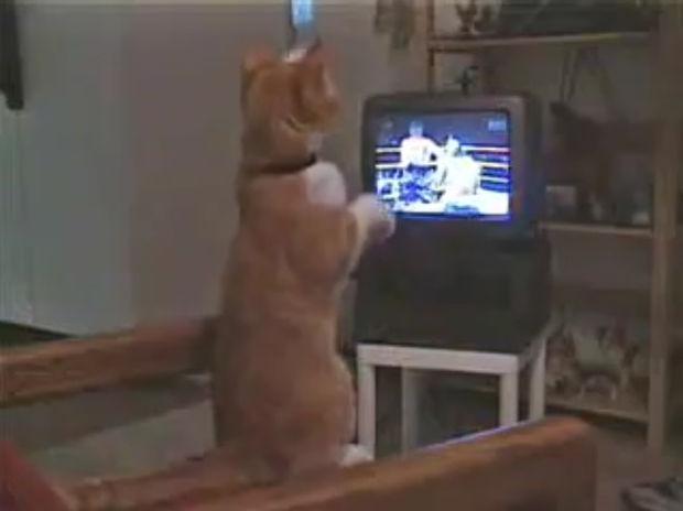 Το όνειρο του γατούλη είναι να γίνει ένας διάσημος μποξέρ! (video)