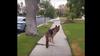 Σκύλος «τρελαίνεται» όταν νομίζει πως έχασε το αφεντικό του (vid)