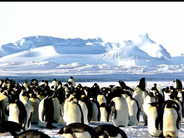 H selfie της χρονιάς μόλις βγήκε από… δύο αξιαγάπητους πιγκουίνους
