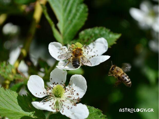 Ονειροκρίτης: Είδες στον ύπνο σου μέλισσες;
