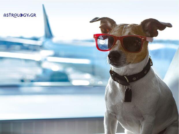 Τα 12 ζώδια ταξιδεύουν με το αεροπλάνο!