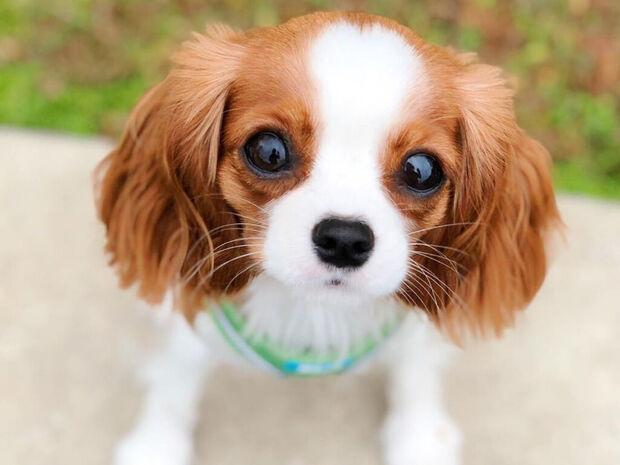 Αυτό το μικροσκοπικό σκυλάκι θα σας κλέψει την καρδιά (pics)
