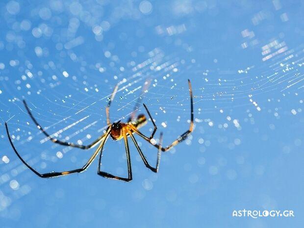 Ονειροκρίτης: Είδες στο όνειρό σου αράχνη;