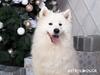 Ζώδια Σήμερα 25/12: Χριστούγεννα γεμάτα κέφι και χαρά
