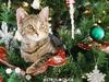 Ένα αστείο χριστουγεννιάτικο gif για κάθε ζώδιο! Θα ταυτιστείς δεδομένα με το δικό σου!