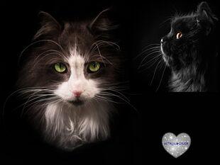 Αν το ζώδιο σου ήταν γάτα, τι ράτσα θα ήταν και γιατί;