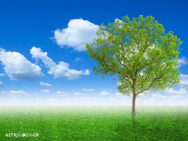 Ονειροκρίτης: Είδες στο όνειρό σου δέντρο;