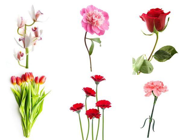 1 από τα 6 λουλούδια της φωτογραφίας αποκαλύπτει κάτι σημαντικό για σένα!