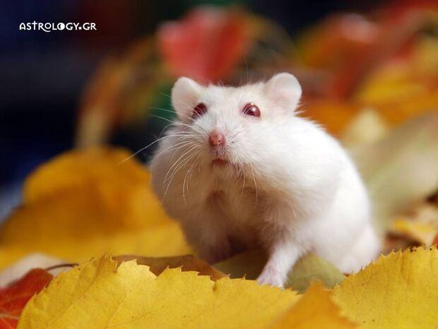 Ονειροκρίτης: Είδες στο όνειρό σου ποντίκι;
