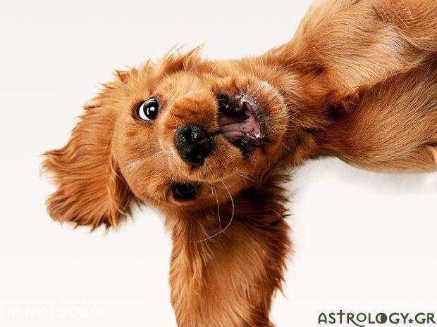 Τα 5 ζώδια που έχουν μεγάλη δόση τρέλας