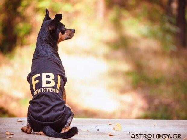 Τα 4 πιο ακίνδυνα ζώδια σύμφωνα με το FBI