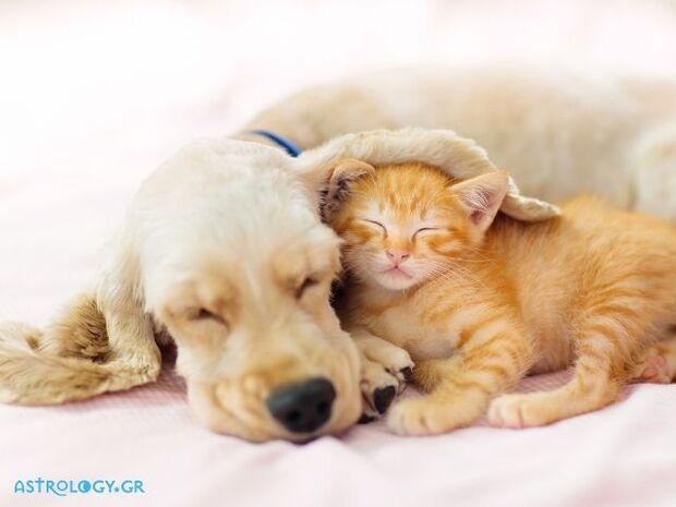 Παγκόσμια Ημέρα των Ζώων: Αυτά είναι τα ζώδια που λατρεύουν το κατοικίδιό τους!