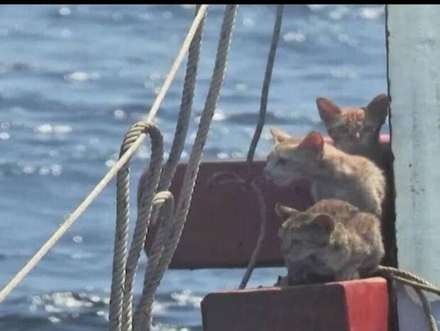 Εντυπωσιακή διάσωση γατιών από ναυάγιο (video)