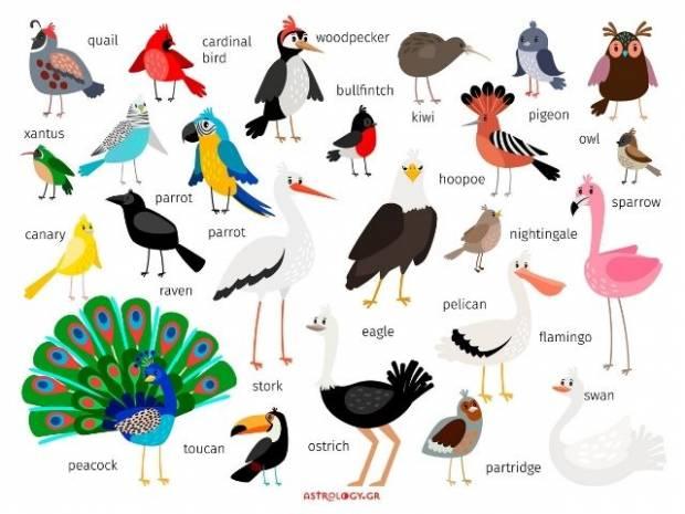 Ποιο πουλί αντιστοιχεί στο μήνα που γεννήθηκες και τι δηλώνει για σένα;