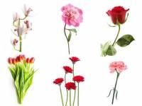 Διάλεξε 1 από τα 6 λουλούδια της φωτογραφίας και μάθε τι φανερώνει για τον χαρακτήρα σου!